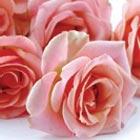 Rosen für die Trauerfeier - Bedeutung der Rose